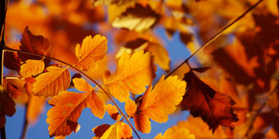 4 Ways to Amp Up Your Blog This Autumn